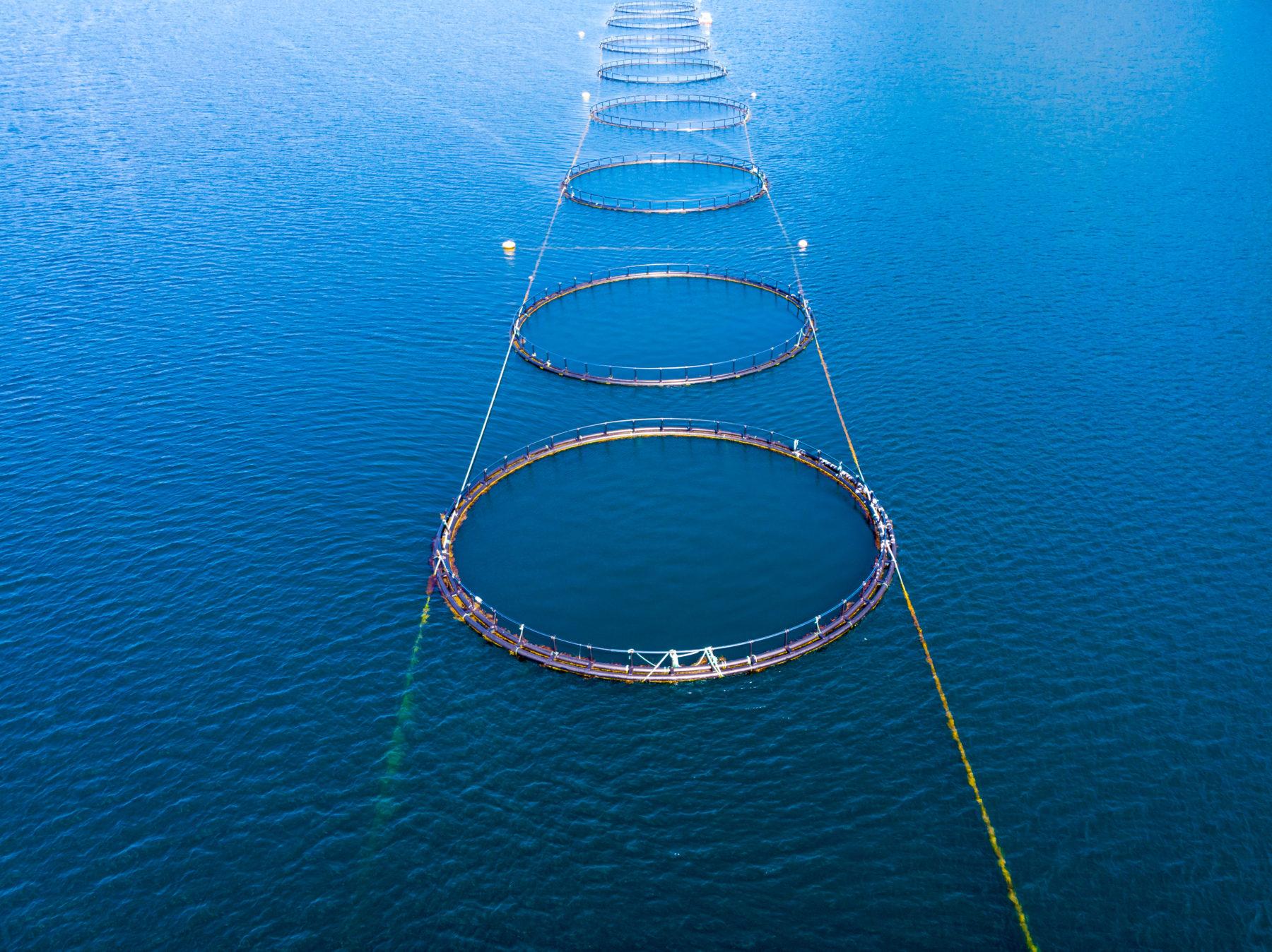 Salmon fishing fish farm on the sea in Lofoten islands Norway.